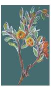 Logo: Zeichnung von geschlungener Pflanze